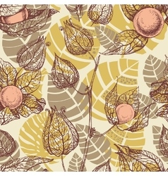 Fruits pattern physalis background vector image