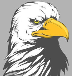 Bald eagle head cartoon vector