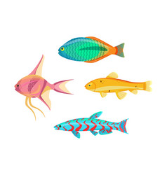 Betta splendens fish types set vector