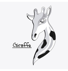 Giraffe icon Animal design Safari concept vector image