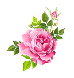 Lovely rose flower vector