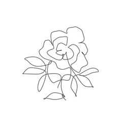 one single line drawing beauty rose flower vector image