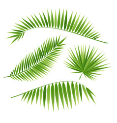 Realistic 3d detailed green palm leaf set vector