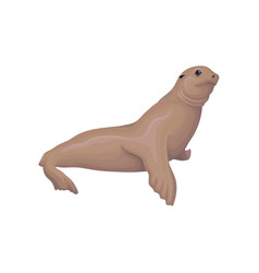 Sea lion animal on a white vector