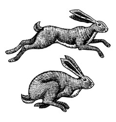 Wild hares rabbits are jumping forest bunny or vector