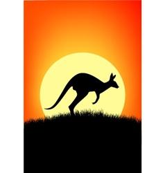 australia kangaroo vector image