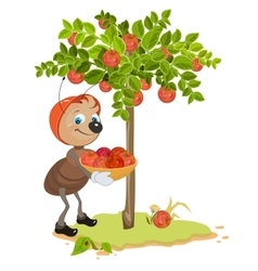 Ant Gardener gather apples Apple tree and red vector image