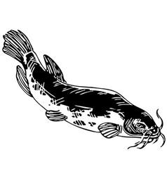 Electric catfish vector