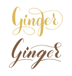 Hand written ginger text isolated on white vector