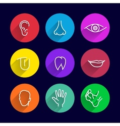 Human body parts vector image