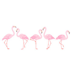 set flamingos vector image