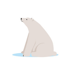 White polar bear animal arctic fauna species vector