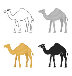 camel icon in cartoon style isolated on white vector image