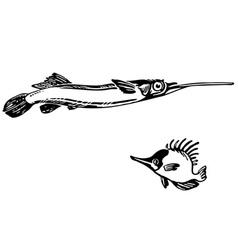 dermogenys pusillus naso unicornis vector image vector image