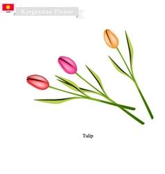 Tulip Flowers The Popular Flower of Kyrgyzstan vector image