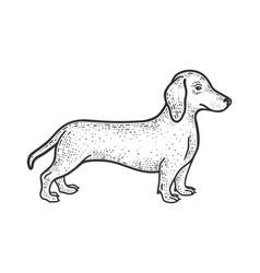 dachshund sketch vector image