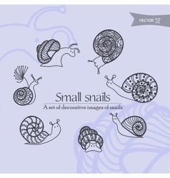 small snails vector image