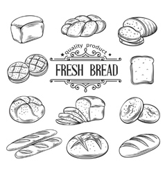 hand drawn decorative bread vector image vector image