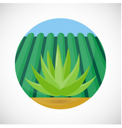 Agave flat icon vector