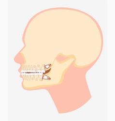 Cartoon model human dental jaw side view vector