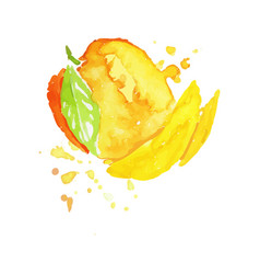 Colorful hand drawn of mango vector