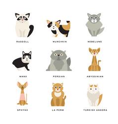 flat domestic breeds cats vector image