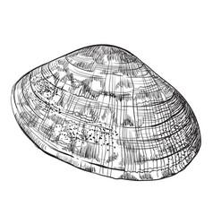 Hand drawing seashell-29 vector