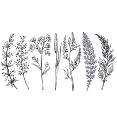 Hand drawn wildflowers and herbs set vector