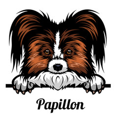 head papillon - dog breed color image a dogs vector image