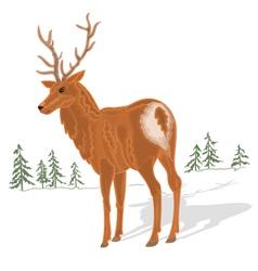 Young-deer vector image