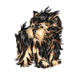 yorkshire terrier puppy vector image