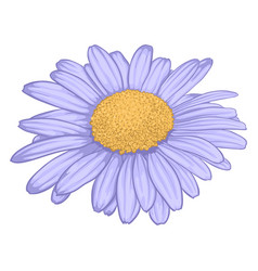 Beautiful daisy flower isolated on white vector