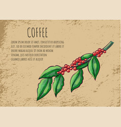 Coffeehouse advertisement branch coffee beans vector