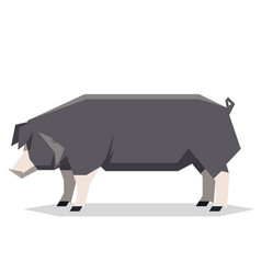 Flat geometric poland china pig vector