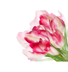 Fresh spring tulip flowers on white EPS 10 vector image