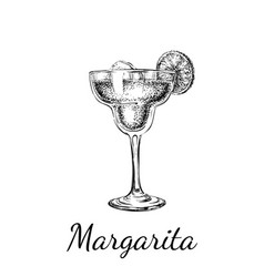 hand drawn sketch margarita cocktail drinks vector image