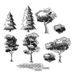plants sketch set vector image