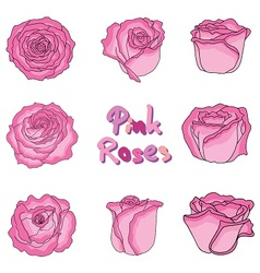 set of pink roses vector image