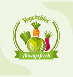 vegetable lettuce carrot onion chives always fresh vector image