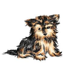 yorkshire terrier puppy vector image vector image