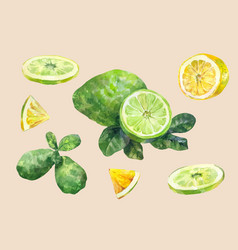 citrus fruit lemon and lime sliced and whole vector image