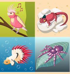 Exotic pets 2x2 design concept vector