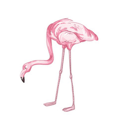 Flamingo hand drawn pink vector