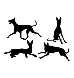 Ibizan hound dog silhouette 02 vector