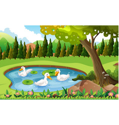 Three ducks swimming in the pond vector
