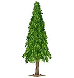 A tall ashoka tree vector