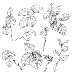 doodle liana vector image