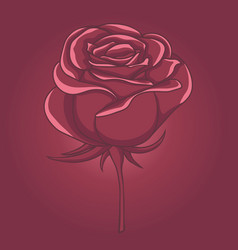 single rose flower isolated pink bud vector image