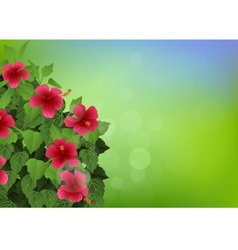 tropical flower background vector image