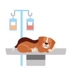 Veterinary clinic petcare vector